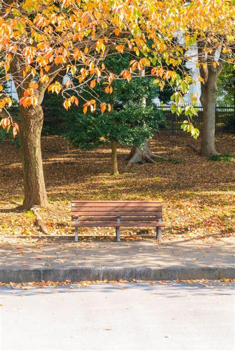 panchina parco panchina nel parco di autunno scaricare foto gratis