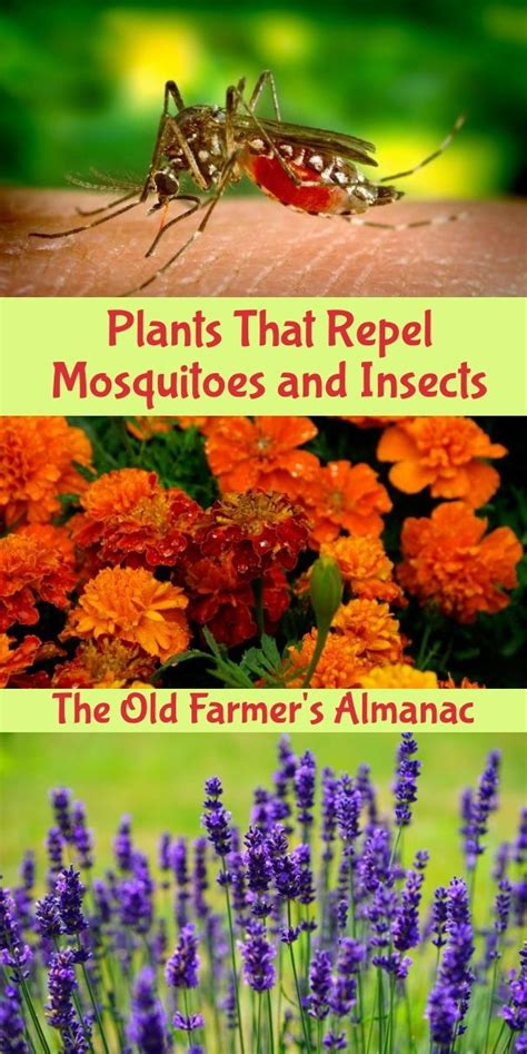plants that repel insects in vegetable gardens 369 best images about gardening tips on