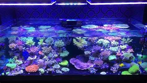 reef with lights orphek atlantik v3 plus reef lights now ready to ship orphek