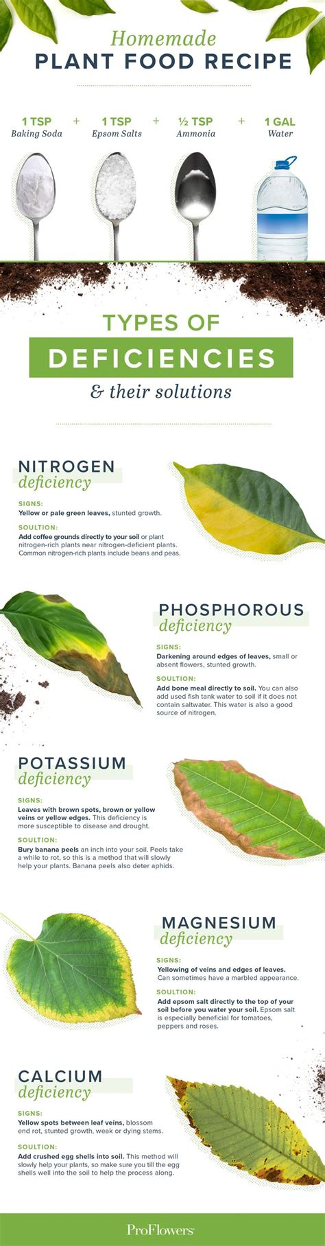 homemade plant food    plants happy  images