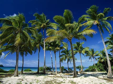 Planting Palm trees to help improve coastal economy in
