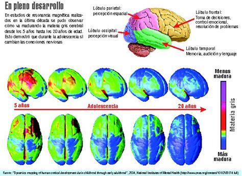 cerebro adolescente la cara desconocida del cerebro 2012 11 04