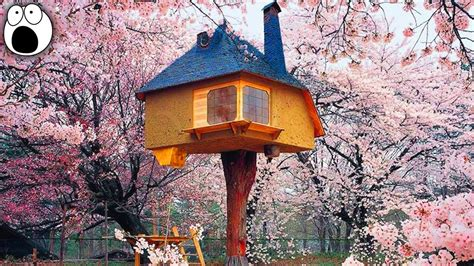 coolest treehouses 20 coolest treehouses in the world