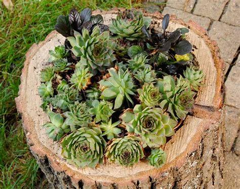 vaso per piante grasse come costruire un vaso in legno per piante grasse fai da