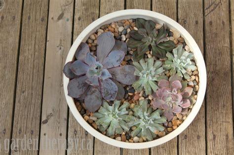modern succulent planter modern succulent planter modernica study garden therapy