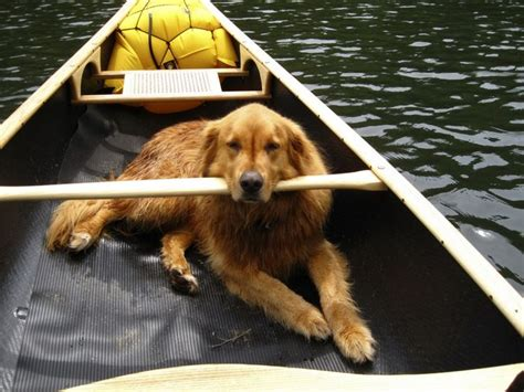canoeing with dogs canoeing with a jeep outdoor