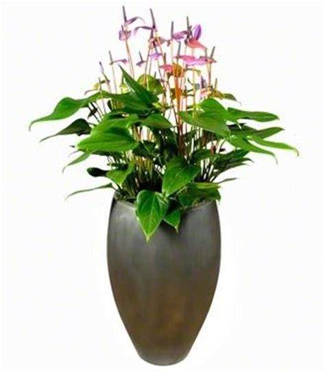 Mooie Planten Voor Binnen by Gemakkelijke Kamerplanten Mooie Potten Chicplants