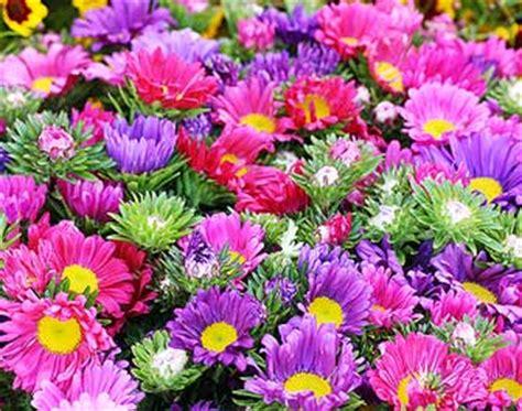 immagini di ci di fiori moriago della battaglia mosnigo 2 170 mostra mercato di fiori