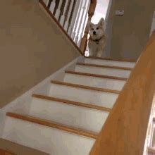 pug stairs gif jumping stairs gif dogs discover gifs