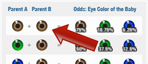 eye color probability do you want to your baby s color check this out