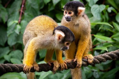 exotic animals    legally