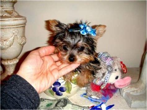 puppies for adoption albuquerque pets albuquerque nm free classified ads