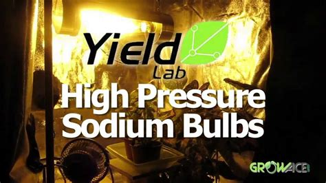 Hps Grow Ls by Hps Grow Bulb Review Yield Lab High Pressure Sodium Hps
