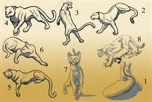 various cat poses by wanderingdragon379 on deviantart