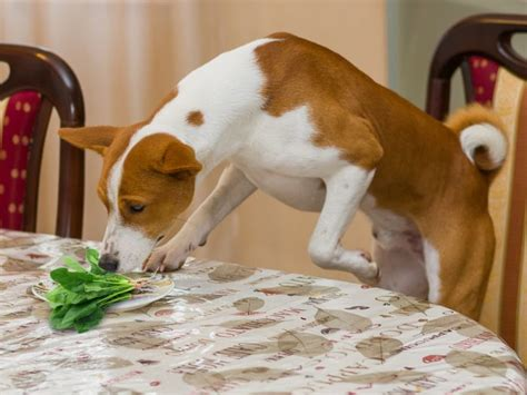 can dogs eat guava can dogs eat spinach organic facts