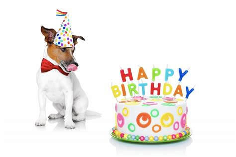 Birthday Surprises For Your Pet by 23 Birthday Ideas That You Must Take Away