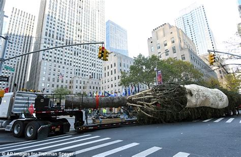 when do they remove rockefeller christmas tree rockefeller tree arrives in new york city daily mail