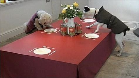 restaurant for dogs cbbc newsround new restaurant opens only for dogs