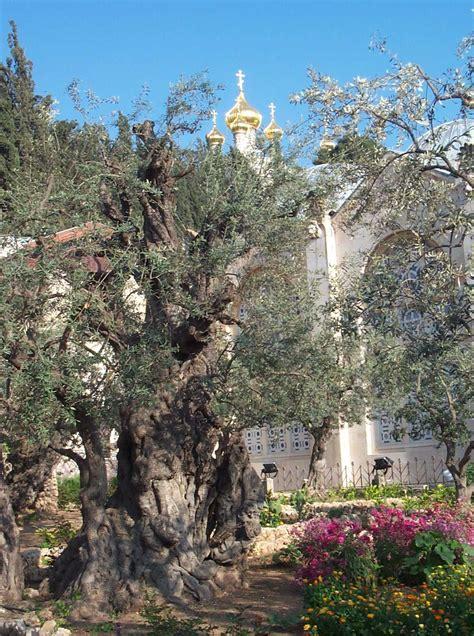 Garden Of Gethsemane Images by Images