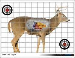 printable deer vital targets printable targets dewclaw archery