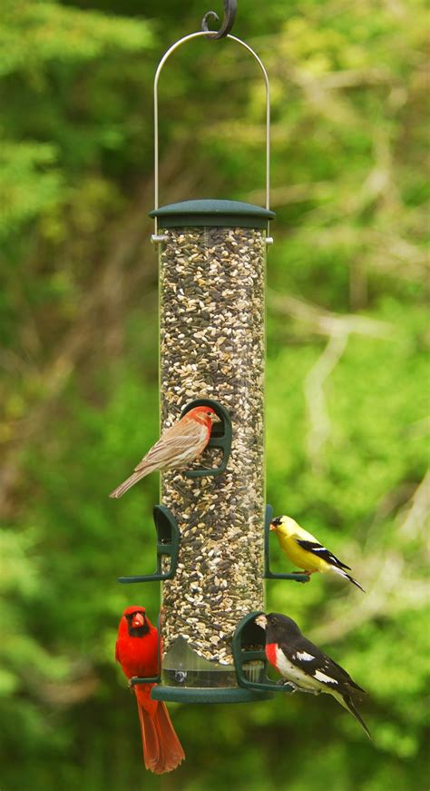 wild birds unlimited choosing the best bird seed