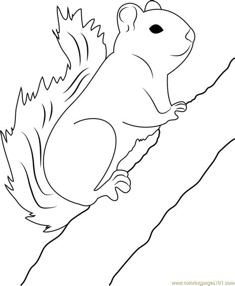 red squirrel coloring page red squirrel on tree coloring page free squirrel
