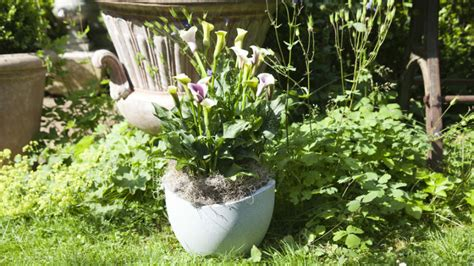 vasi per piante grandi westwing vasi grandi fascino ed eleganza in giardino