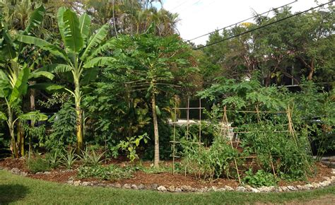 Plant a food forest   Ready To Grow GardensReady To Grow