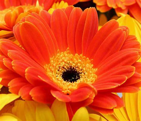 foto di un fiore un fiore associazione culturale la rucola