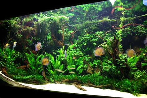 best substrate for aquascaping best substrate for aquascaping is white sand problematic