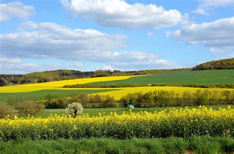 picture canola field countryside farming plant
