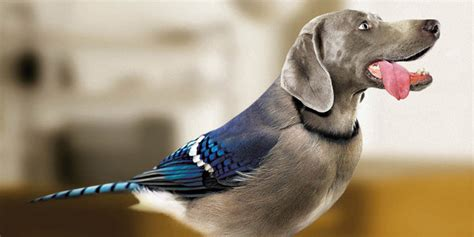 dogs with birds with heads and dogs with bird bodies are dirds derrrrr huffpost