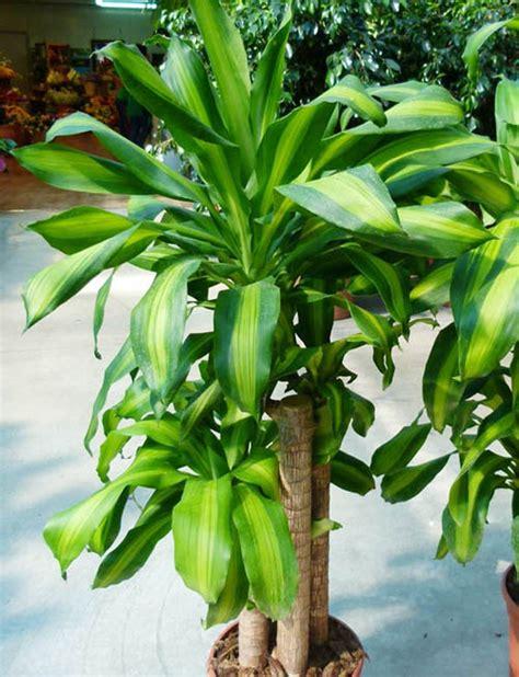 piante da ufficio 11 piante da ufficio per migliorare l ambiente di lavoro