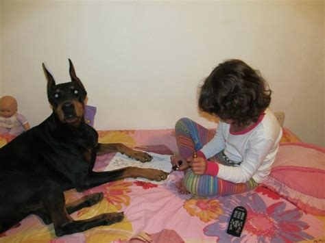painting dogs nails photos gossip genie