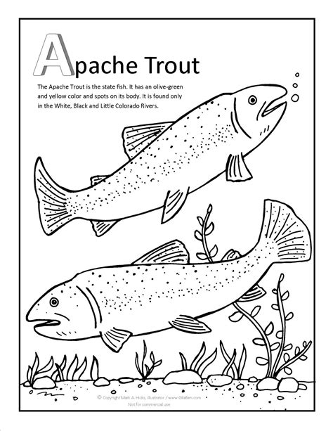 trout fish coloring page trout coloring pages