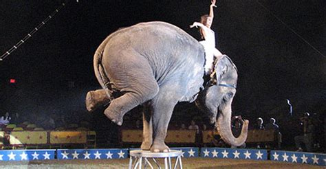 Circus Elephant Rage Colleen Tygh S Engl137h Section 9