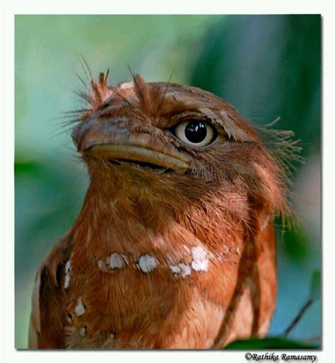 P 3116 Fork Animal Friends 56 best birds images on beautiful birds birds and butterflies