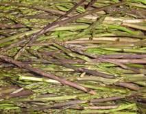 asparagi selvatici come cucinarli sagre di primavera in cania carciofi e asparagi selvatici