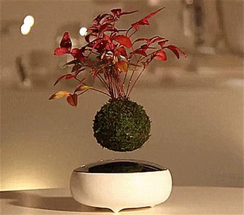 air bonsai   floating bonsai tree   magnets