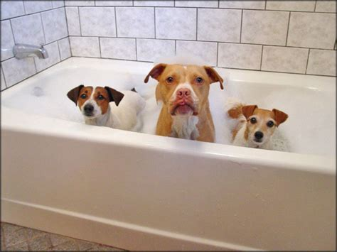 dog bathtubs for home use bathtub liners made from what material