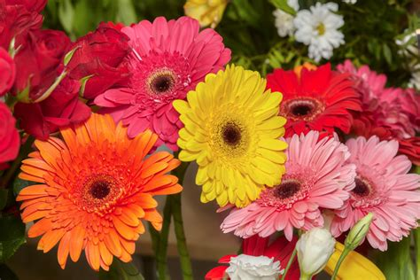fiore gerbera significato dei fiori gerbera