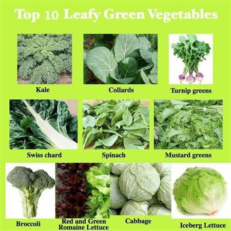 green vegetables p top 10 leafy green vegetables vegetable buds