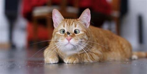 imagenes chistosas gatos imagenes de gatos y perros tiernos y graciosos animales hoy