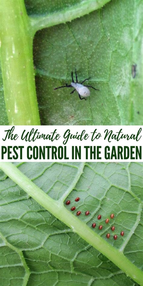 pests in the garden the ultimate guide to pest in the garden