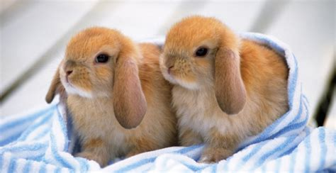 care information rabbit care information chadwell animal hospital