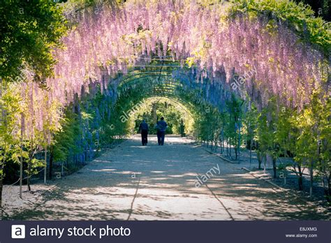 Botanic Gardens South Australia Colourful Wisteria Arch In The Adelaide Botanic Gardens South Stock Photo Royalty Free Image