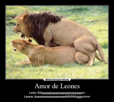 Imagenes De Leones Haciendo El Amor | leon y leona enamorados imagui