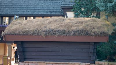 living arc green roofs photographer s garden introduction to living roofs