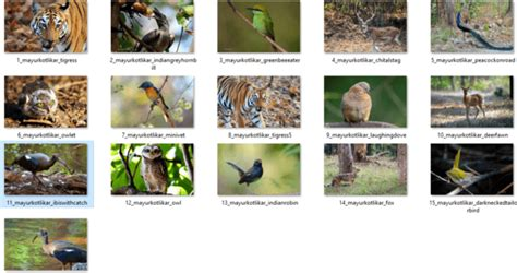 indian themes for windows 8 1 indian wildlife theme for windows 10 8 and 7