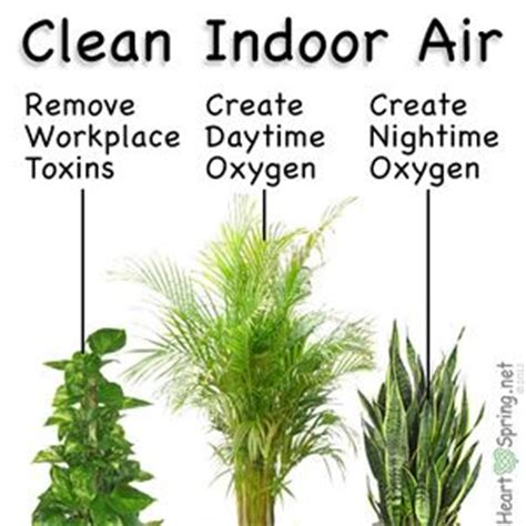 ideas  air purify plants  pinterest